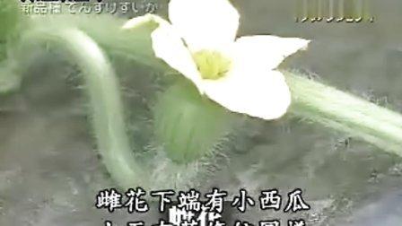 料理东西军-2004-03-24-宇治金石冰VS意式冰淇淋