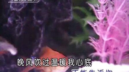 韩宝仪-粉红色的回忆_KTV_伴奏