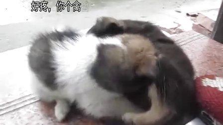 【囧】爆笑宠物,两只小狗狗猥琐的亲热,小朋友误入!