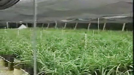 建兰的栽培技术