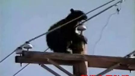来吧,我的好友泰迪熊…