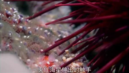 生命·08.海洋无脊椎动物.(下)