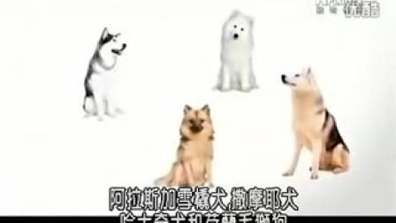 嗨宠精选《狗狗101》【博美】