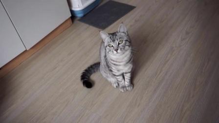 当猫咪看到长得和自己一模一样的抱枕后,这情绪变化太快