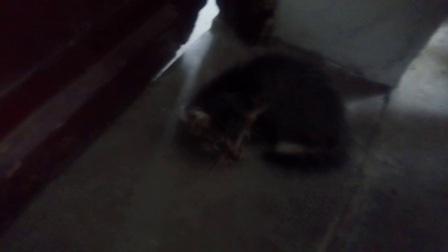 逗猫小组 1