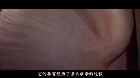 实拍女人体外受精全过程