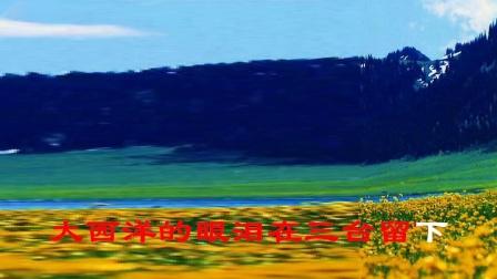博尔塔拉蒙古自治州森林 风景