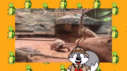 Nuki 探望乌龟和朋友