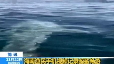 海南渔民手机视频记录鲸鲨畅游