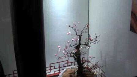 常州红梅公园第十二届梅花节