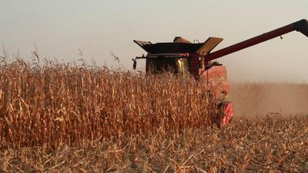 收割机玉米采收