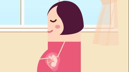 【孕2周】孕期知识、身体结构、早孕
