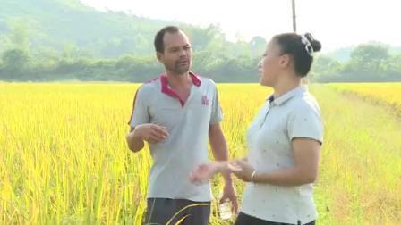 众合粮食加工厂,龙头企业,自己种的稻谷吃起来更放心