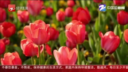 浙江经视新闻 100秒看浙江:春暖花开 生机盎然