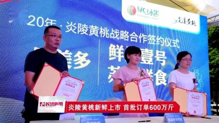 [长沙新闻]炎陵黄桃新鲜上市 首批订单600万斤