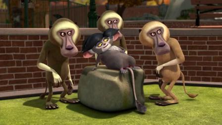 马达加斯加的企鹅:大毛假发不见了,被狒狒发现,瞬间遭受暴打!