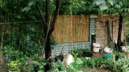 小后院,避暑的小凉亭,已被小猫猫占领