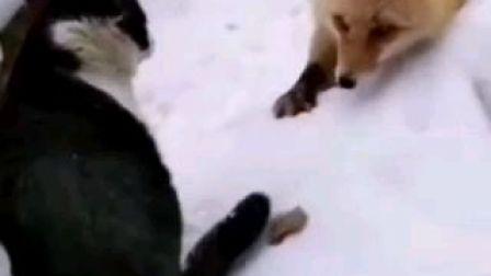 狐狸遇见猫