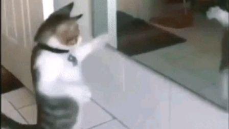 小猫咪照镜子 跳起舞来 我怎么这么好看 太搞笑了!@电流小助手(电流ID:1000225)@柏玲月月(电流ID:6661492)@二哥宇(电流ID:434664