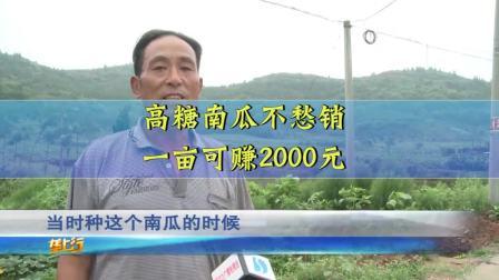 村民种植高糖南瓜竟不愁销路,不仅好管理,一亩还能能卖2000元.