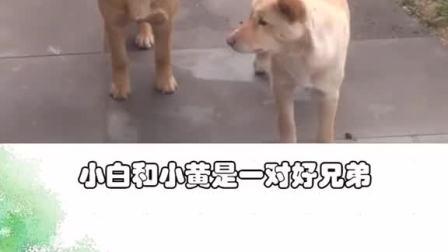 两只狗狗相伴去披萨店讨吃的