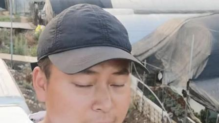 昆明斗南,拍这个视频我从窗户爬到车顶上了,旁边的阿姨应该不知道什么是短视频😂😂😂