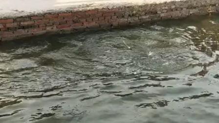 猜猜这条鱼多大