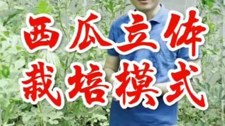 大棚西瓜种植技术 西瓜立体栽培模式