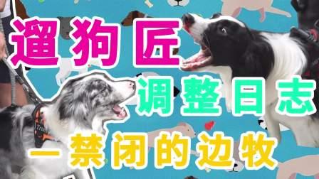 曲奇泡芙调整日志1~1