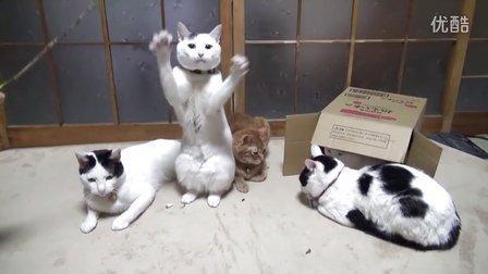 淡定的猫叔从不参与拈花惹草