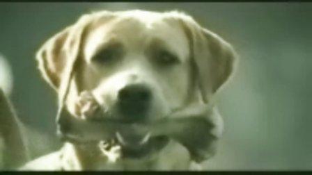 奔驰经典广告狗与妻