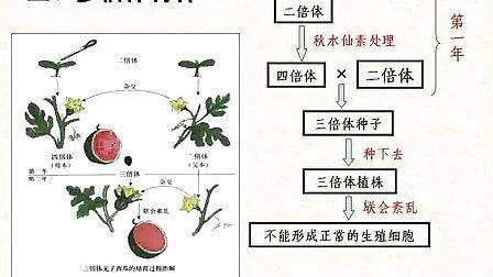 汉水丑生高中生物必修二从杂交育种到基因工程
