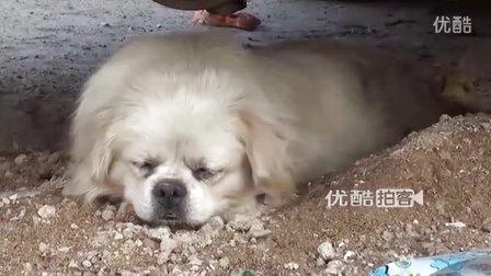 【拍客】狗狗避暑钻车底装死卖萌