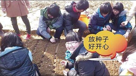 茶树种植照片视频