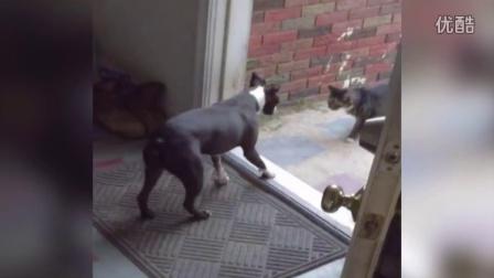 【冯导】看门狗不断打开门看猫