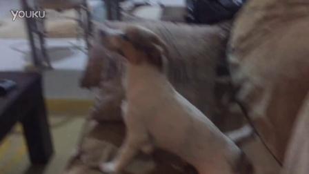 【冯导】狗狗看恐怖片最后被吓傻