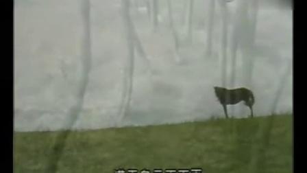 那根藤缠树(篱笆·女人和狗)三部曲