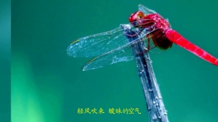 树叶上的蜻蜓