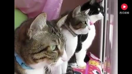 3只喵星人看到窗外有只鸟,求猫语10级翻译!