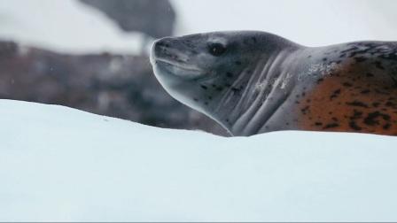 夸克探险公司带您体验南北极人生之旅