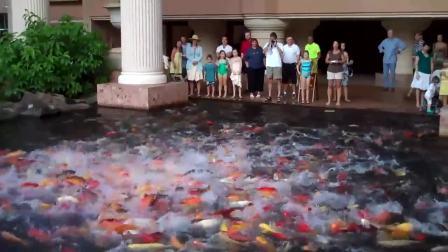 Feeding the Koi Fish at Marriott