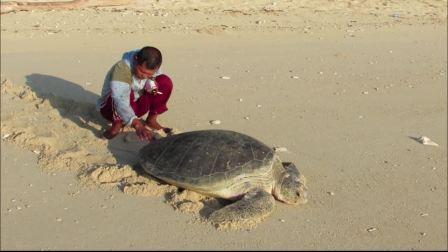 无人小岛 Pulau Dua 的动物