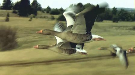 取自视频《迁徙的鸟》 配上歌曲《今生相爱》
