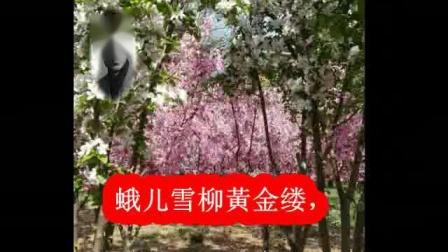 青玉案 元夕  作词:辛弃疾 作曲:杨登勋