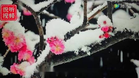 音乐欣赏:二胡伴歌《一剪梅》费玉清演唱:通辽市赵万玉二胡音乐作品集。
