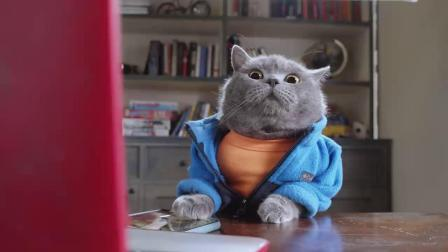 当猫咪被疫情隔离后会发生什么?aaronsanimals