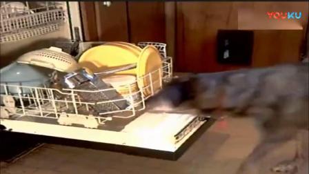 狗狗自己把家里收拾的干干净净, 主人下班回家后感动的要哭!