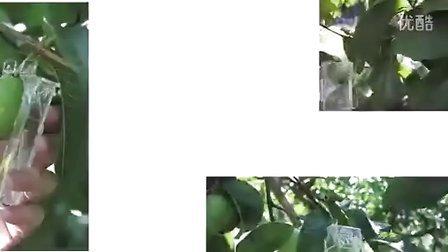 【iWebAd】真果汁