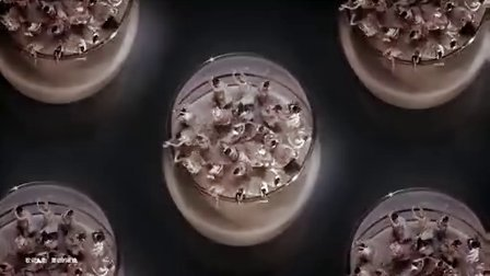 百利甜酒最新广告