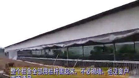 发酵床生态养殖技术-养猪技术视频 养猪技术 养猪技术视频